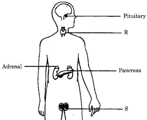2005 SECTION B 5 Figure 5.1 shows the endocrine system of a man. Rajah 5.1 menunjukan