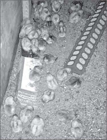 Serve warm or cold. FTY caused 49,000 crashes in '15 Our 42 baby chicks came this