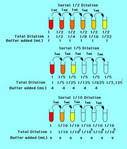 A diagram of 1:2, 1:5, and 1:10 serial dilutions. Diagram stolen from: http://ntri.tamuk.edu/dilutions/dilution.html X solutions Stock