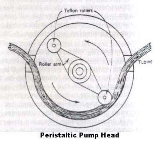 section. This peristaltic action produces a wave like, pulsatile flow of the blood through the tubing