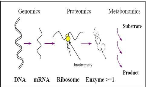 Schematic diagram showing the branches of molecular biology. Fig.2 The Molecular basis of life. The detection