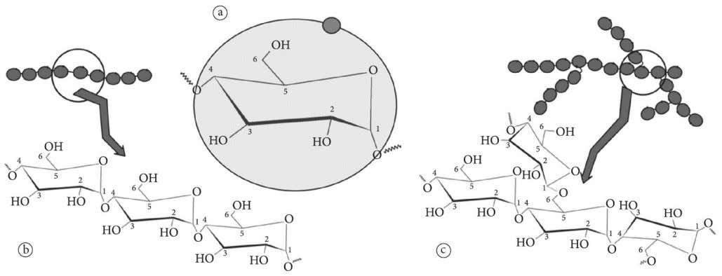 Properties of starches from different sources Figure 1 . Basic structural design of (a) glucose units,