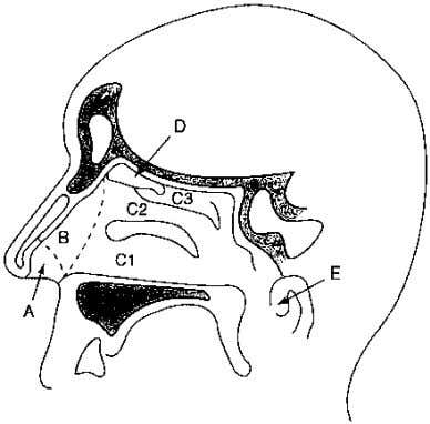 are then cleared from the nasal cavity by the cilia. 1 7 Figure 1: Schematic of