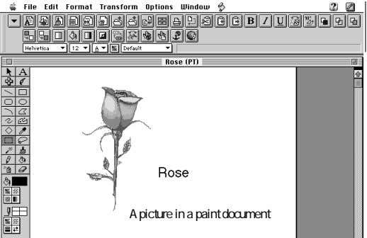 A picture in a paint document