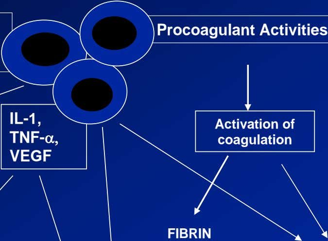 IL-1, Activation of TNF-α, coagulation VEGF FIBRIN