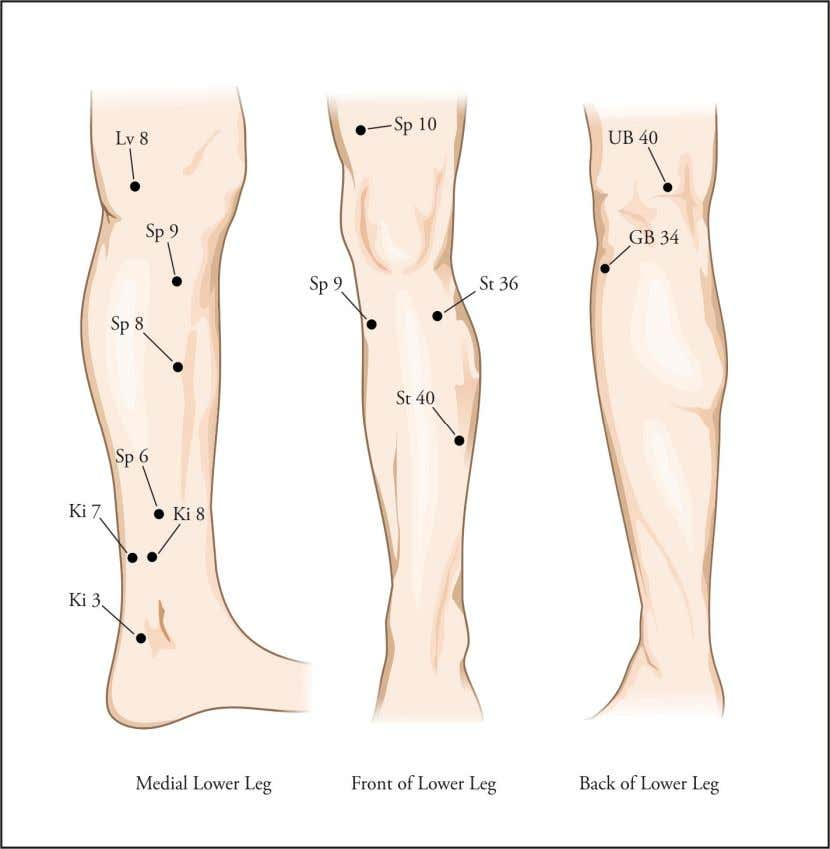 Figure 5: Leg Acupoints Great News !!! You can download full content of this EXCLUSIVE