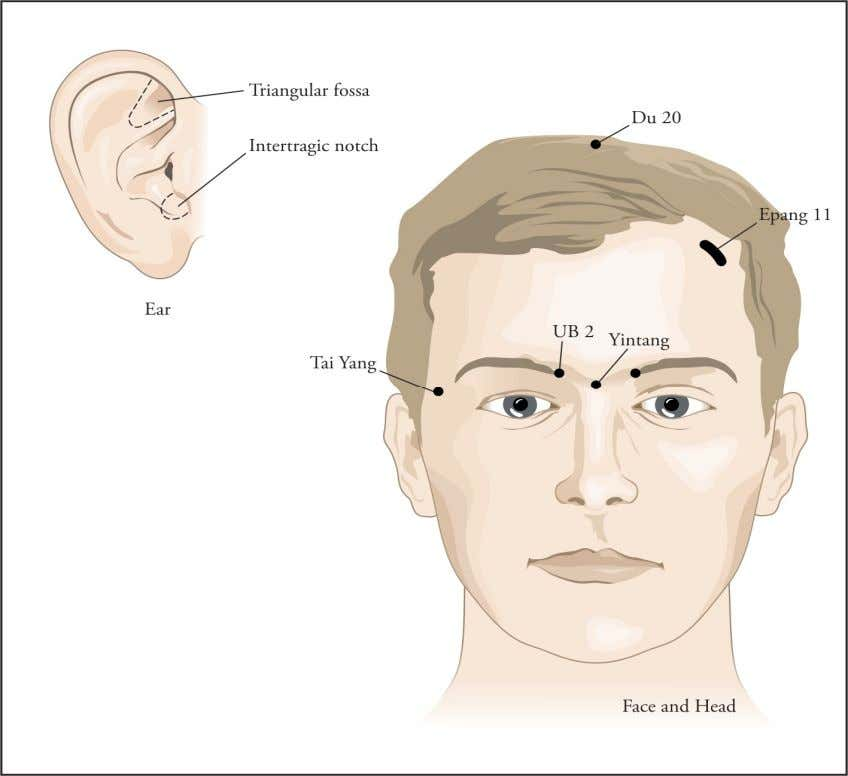 Figure 6: Face and Head Acupoints Great News !!! You can download full content of