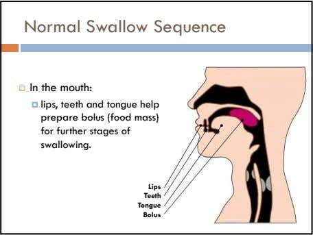 Normal Swallow Sequence In the mouth: lips, teeth and tongue help prepare bolus (food mass)