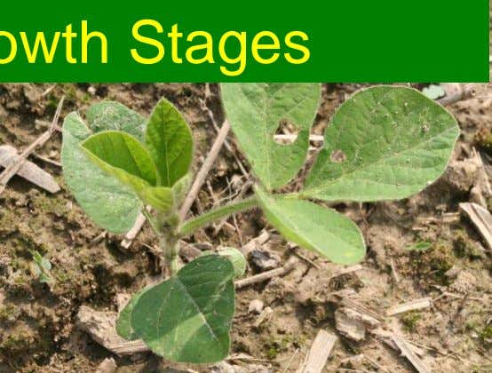 Vegetative Growth Stages 2 Reproductive Growth Stages