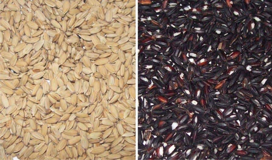 2.1 Introduction 23 Fig. 2.1 A typical kernel of Chinese black rice with attached hull and