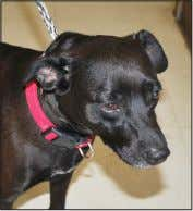 female Terrier Mix. She likes to play with other dogs. CALYPSO Calypso is a 3 to
