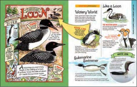 facts throughout make this an ideal guide for beginner bird-watchers—of any age! 4 | Black Dog