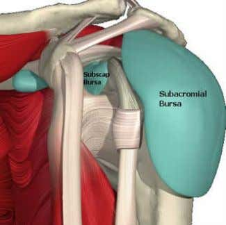 that is designed to prevent any friction at the shoulder. The bursa at the shoulder is