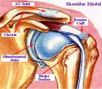 "to ""AC joint."" This picture shows the main parts of the shoulder An electronic book by"