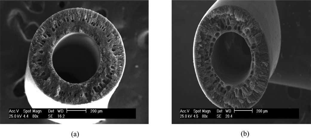 of the laboratory stripping membrane contactor system. Fig. 4. SEM images of the cross section fiber