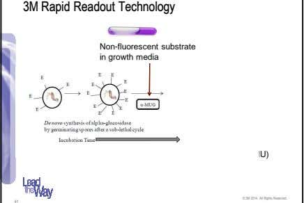 3M Rapid Readout Technology Non-fluorescent substrate in growth media Fluorescent by-product (4-MU) detected in