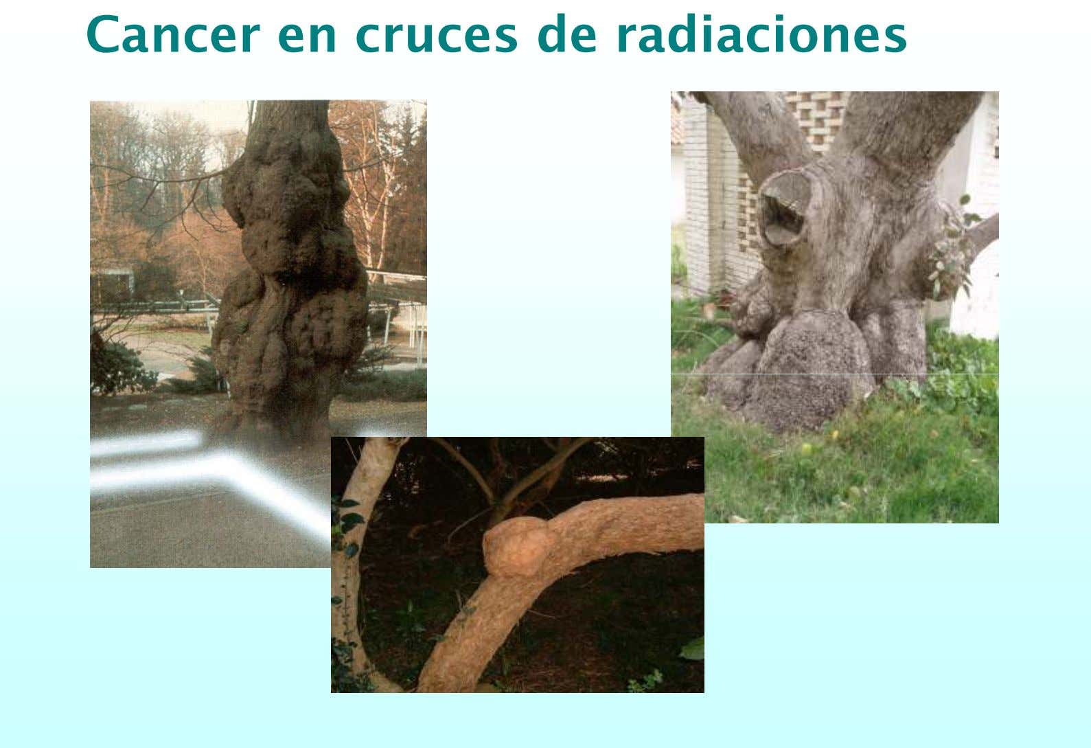 Cancer en cruces de radiaciones