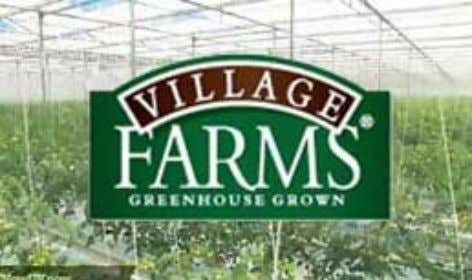 Village Farms Marfa, Texas US, Mexico, DR  Hydroponically grown tomatoes, bell peppers, and cucumbers.