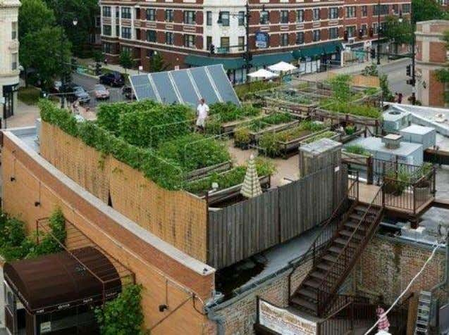 Rooftop Garden/Farming, Chicago Uncommon Ground, a certified green restaurant in Chicago, hosts an organic farm on