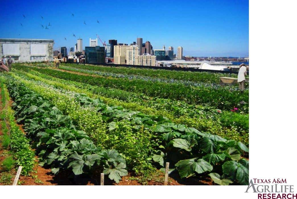 Higher Ground Farm – Boston's First Commercial Roof Farm