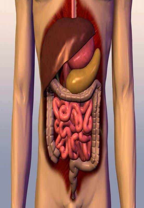 the digestive system is to breakdown food to facilitate effective transport of nutrients to different parts