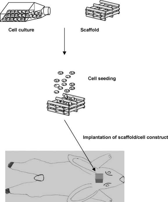 M Martina, DW Hutmacher Figure 1. Schematic of scaffold-ba sed tissue engineering. of the polymers, some