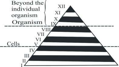 "size and complexity of the biological patterns encountered. ""Why is this diagram called the Pyramid of"