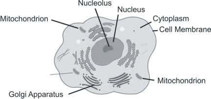 Difference between Mitosis and Meiosis Typical Animal Cell K Typical Plant Cell Specialization of Cells If