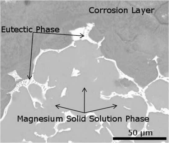 Figure 2. SEM micrograph highlighting the morphology of the corrosion layer forming on a ZX152