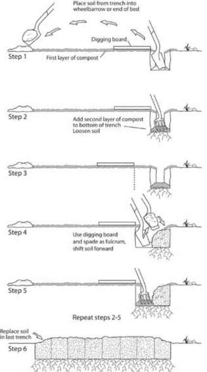 STEPS FOR DOUBLE DIGGING