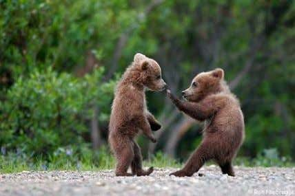 join-fu guidelines See, even bears practice join-fu. ● Always try variations on a theme ● Beware