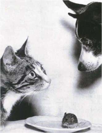 "for it is thy friend"" can't we all just get along? http://www.ringelkater.de/ringel_witzig/cat_dog_mouse.jpg"