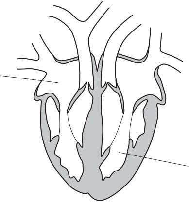 vertical section through a human heart. X What are X and Y? Y   X Y