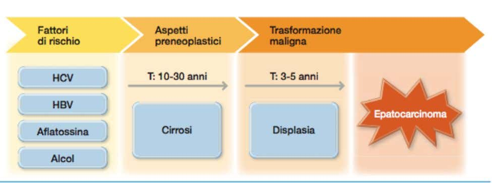 HCC classificazione anatomopatologica