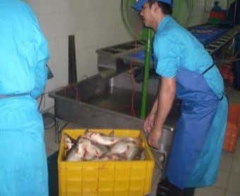 IN WHITE FISH PRODUCTION BUT ALSO OVERCAPACITY IN PROCESSING Of the 2.563 mill MT produced fish