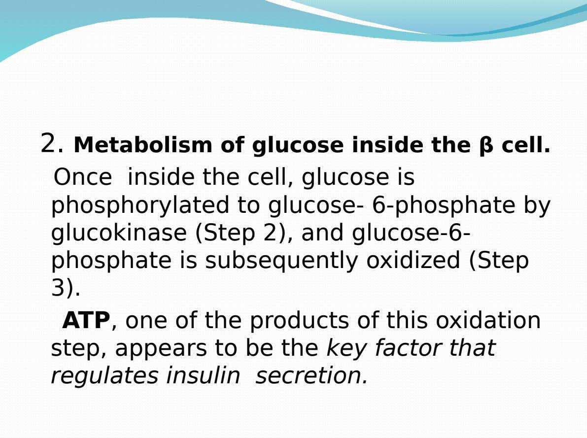 2. Metabolism of glucose inside the β cell. Once inside the cell, glucose is phosphorylated to
