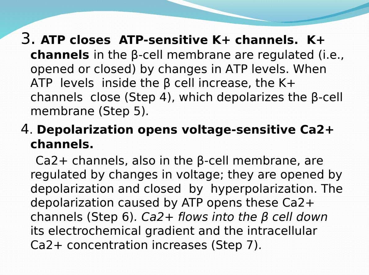 3. ATP closes ATP-sensitive K+ channels. K+ channels in the β-cell membrane are regulated (i.e., opened