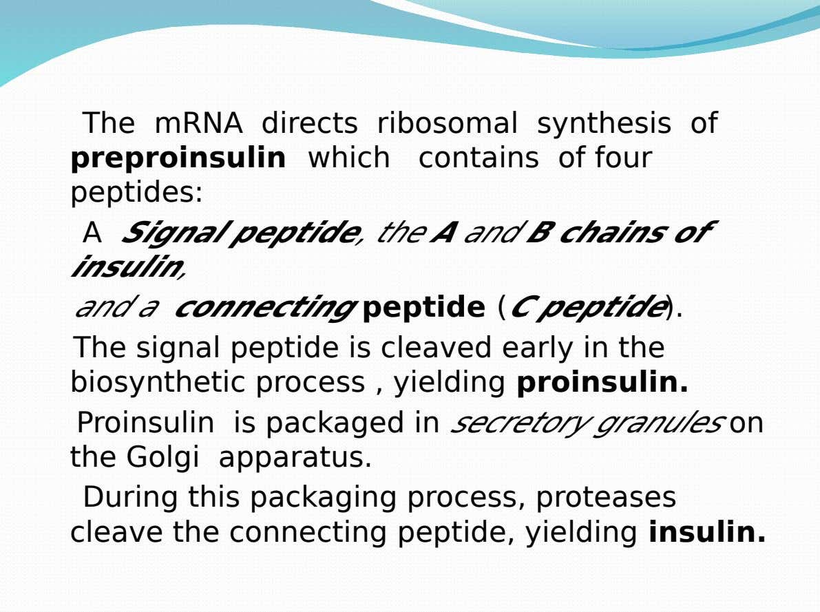 The mRNA directs ribosomal synthesis of preproinsulin which peptides: contains of four A Signal peptide, the