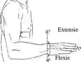 Extensie Flexie