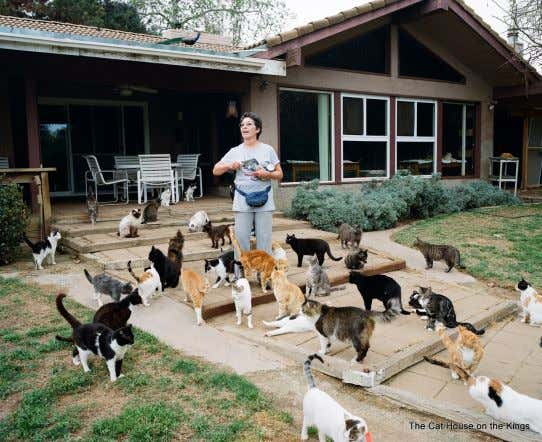 and to educate the public about responsible pet ownership. Lynea Lattanzio at The Cat House on