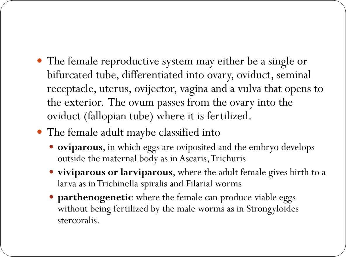  The female reproductive system may either be a single or bifurcated tube, differentiated into ovary,