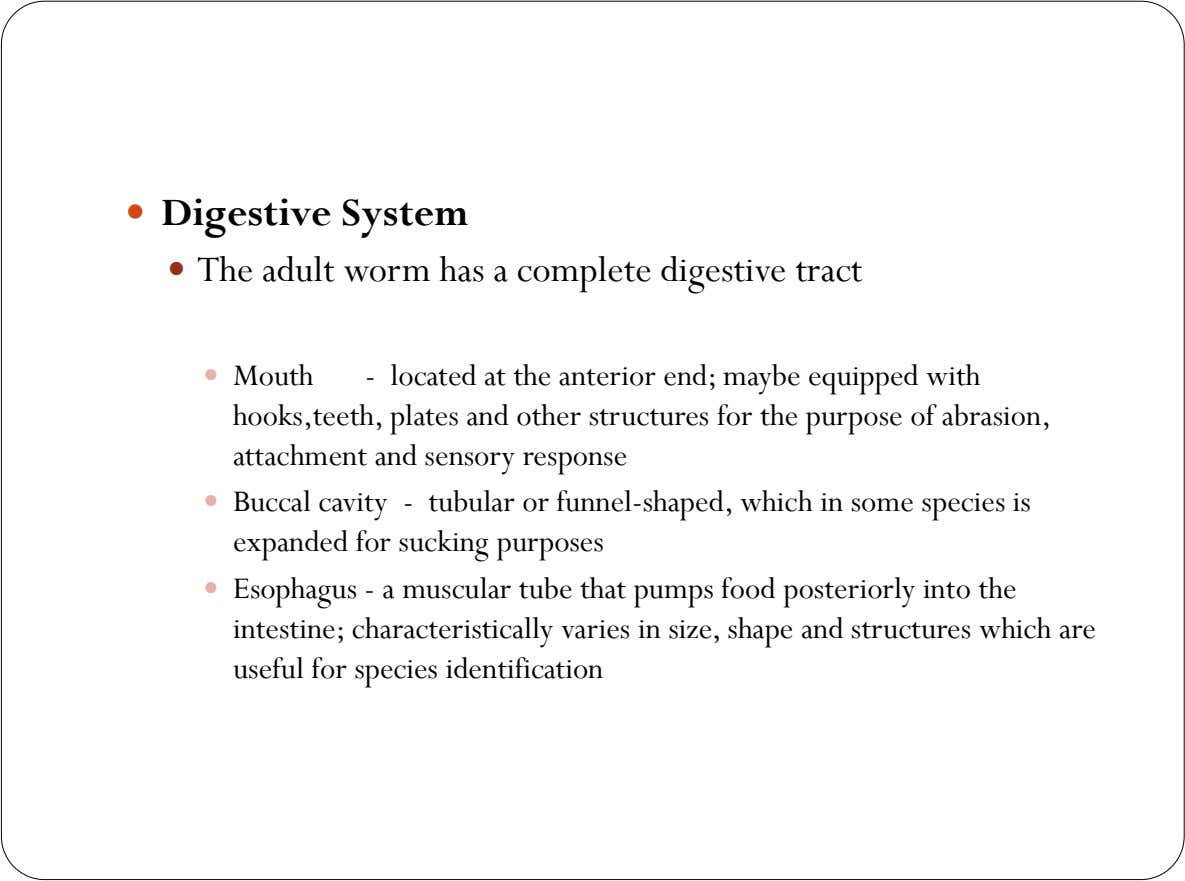  Digestive System  The adult worm has a complete digestive tract  Mouth - located