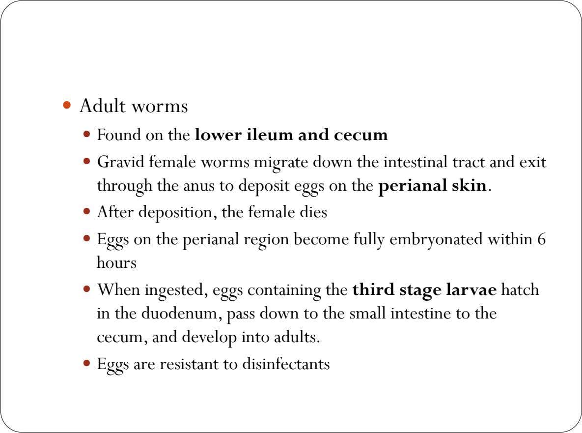  Adult worms  Found on the lower ileum and cecum  Gravid female worms migrate