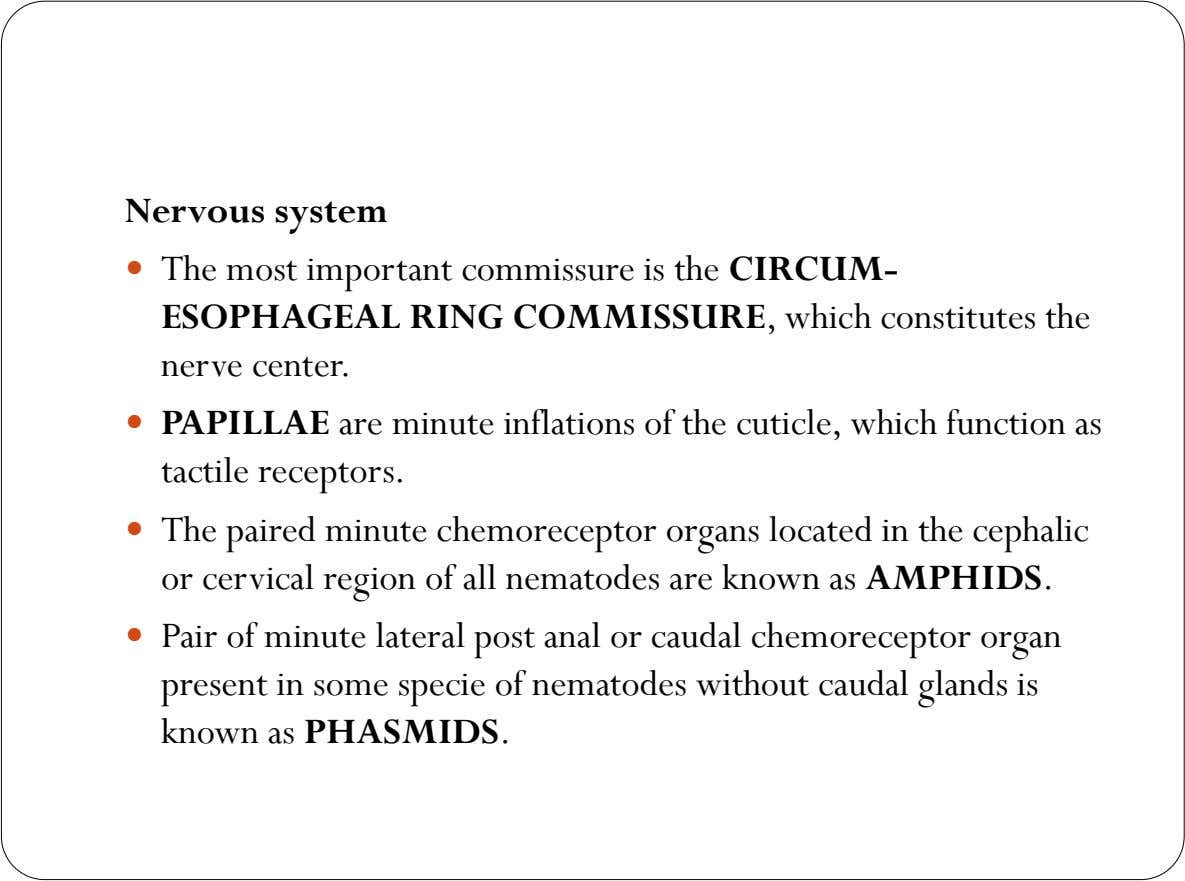 Nervous system  The most important commissure is the CIRCUM- ESOPHAGEAL RING COMMISSURE, which constitutes the