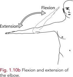 Flexion Extension Fig. 1.10b Flexion and extension of the elbow.