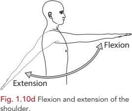Flexion Extension Fig. 1.10d Flexion and extension of the shoulder.