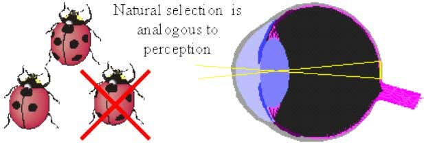 sensing its Umwelt with selective survival and reproduction. Perception requires information transfer. A photoreceptor