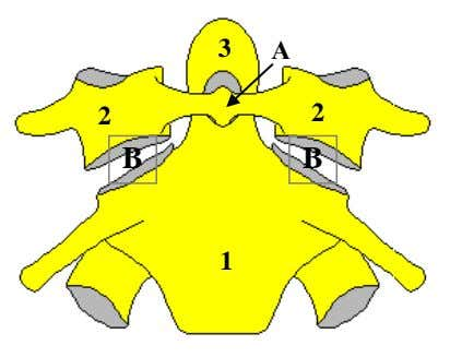 of anatomical structures indicated in the figure? 1. 2. 3. 4. 5. 6. 7. 8. Atlantoaxial