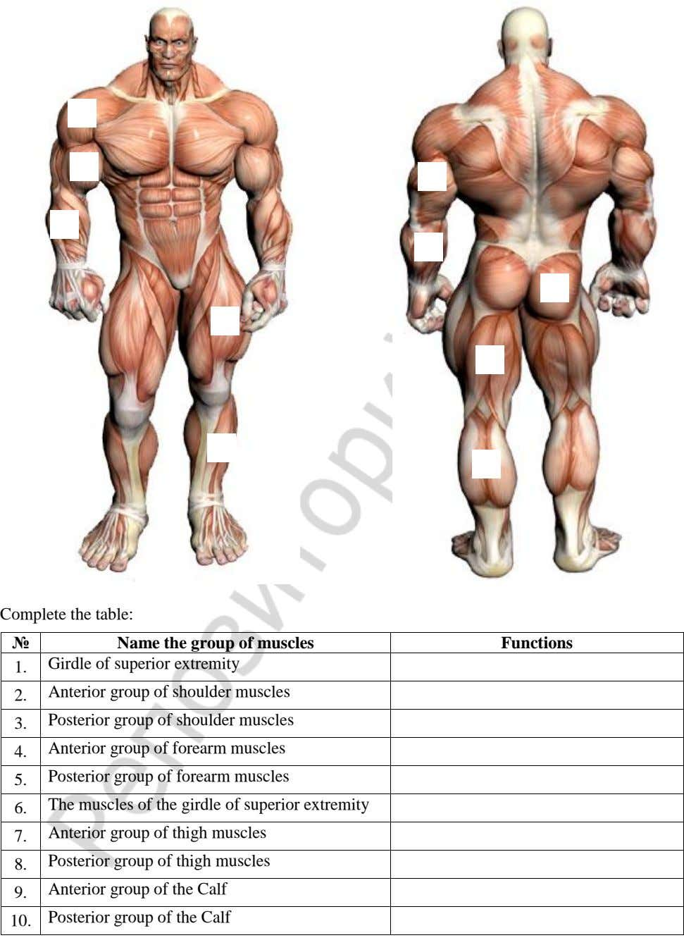 Complete the table: № Name the group of muscles Functions Girdle of superior extremity 1.