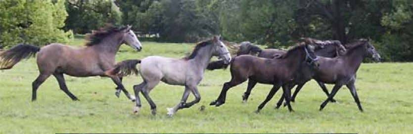 The same yearlings show what person lovers they are: from left, Moet, Montenegra, Monterosa, Favory Pomona